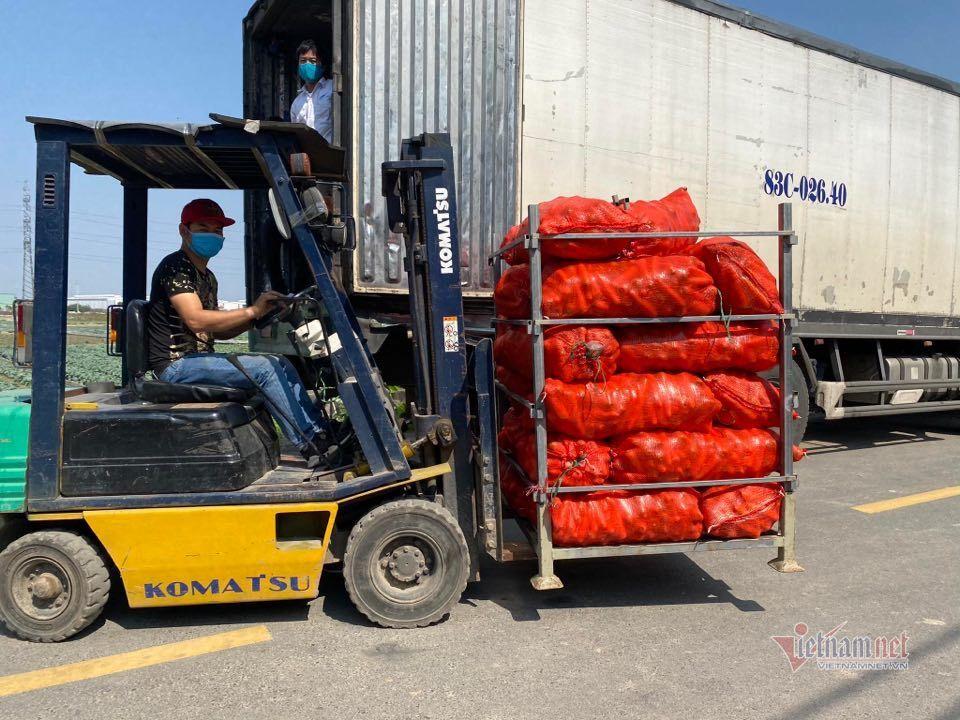 Từ tâm dịch Hải Dương thông hàng sang Hàn Quốc: Bán giá cao hiếm thấy