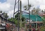 Cây xương rồng 60 tuổi, cao 12m trong nhà cổ nổi tiếng nhất miền Tây