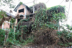 Multi-billion VND villas left unused in forest