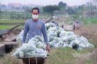 Lên sàn giải cứu nông sản đến tận tay người mua