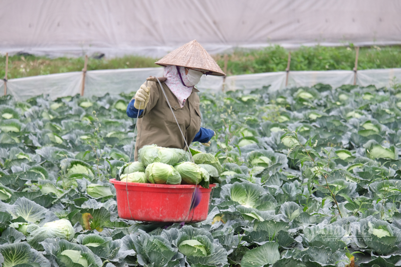 Lên sàn giải cứu, đưa nông sản đến tận tay người mua