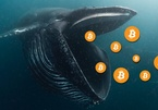 Sự nguy hiểm của 'cá voi' Bitcoin