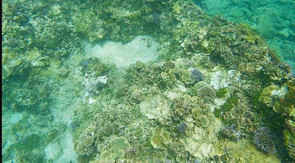 Tour guides form team to save coral off coast of Binh Thuan Province