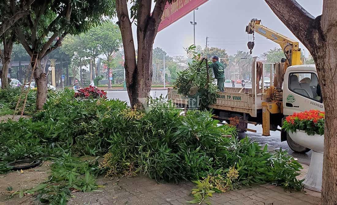 """Hàng loạt cây xanh ở """"trái tim thành Vinh"""" bị đốn hạ làm phố đi bộ"""