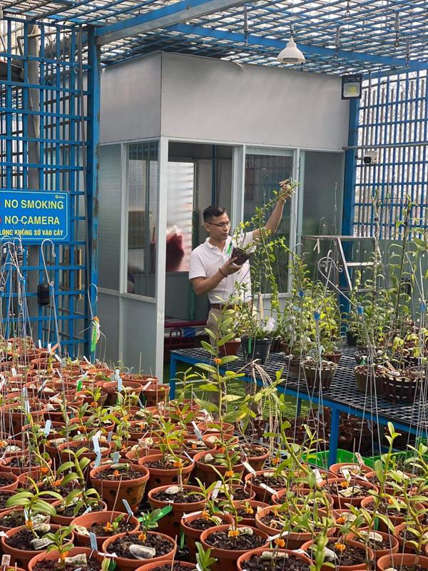 Ông chủ vườn lan Hải Phòng mách cách kích mầm lan phi điệp