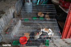 Vietnam to fine animal abusers