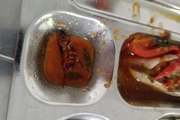 Phát hiện gián trong suất cơm trưa ở căng tin trường học