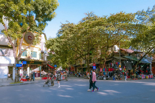 Old green trees - a special heritage of Hanoi