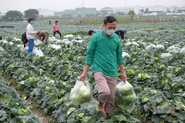Farmers in Hai Duong turn to e-commerce sites to sell produce