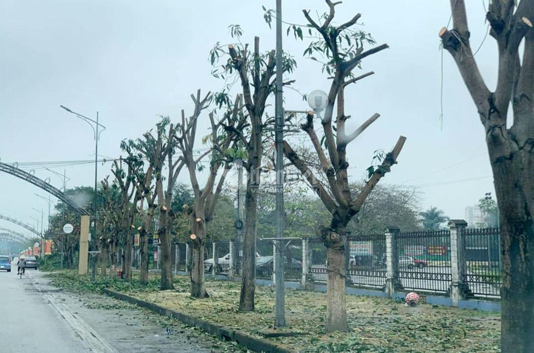 Bằng sự thiện tâm, xin hãy trồng một cây
