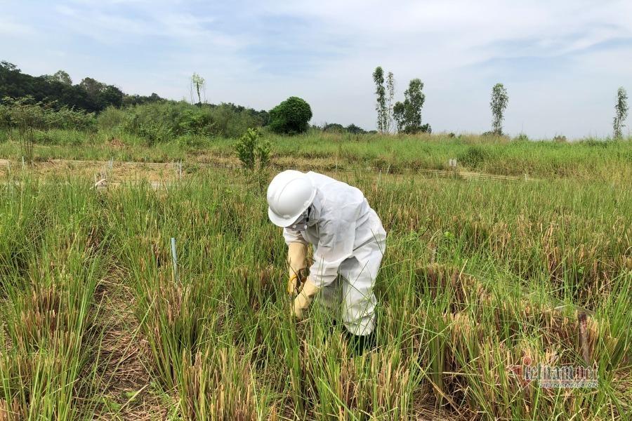Nữ tiến sĩ với giấc mơ hồi sinh những 'vùng đất chết' ở Việt Nam