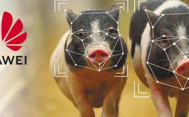 Huawei chăn nuôi lợn và 'đào vàng'