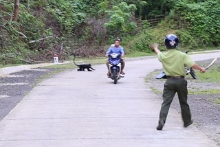 Monkeys attack passersby in Quang Tri