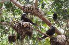 Phát hiện loài cây 'tử thần' chuyên giết chim để biến xác thành phân bón