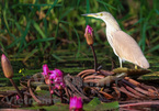 Tram Chim Park home to spectacular diversity of bird species