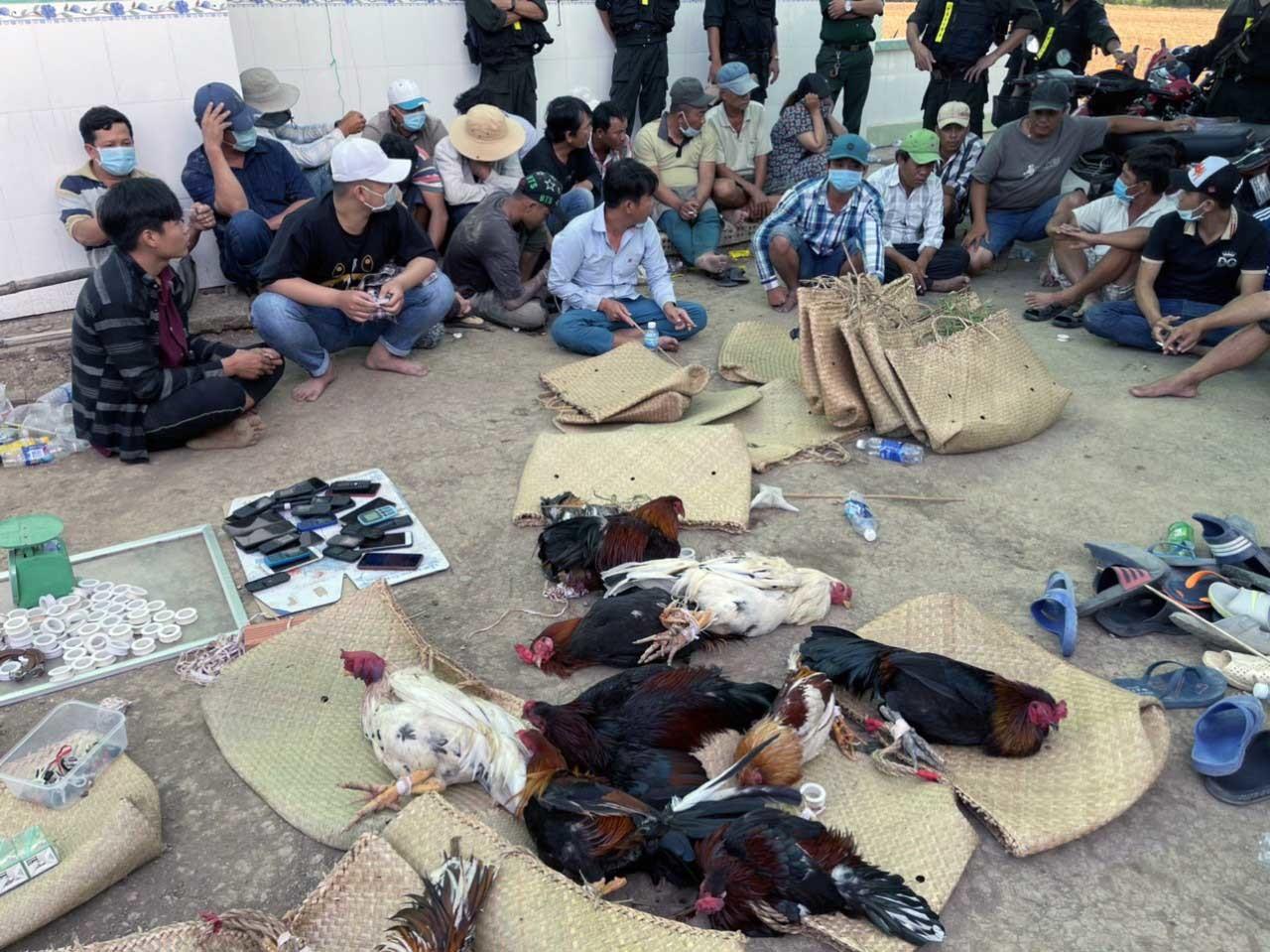 Cảnh sát hóa trang thành đại gia, đánh úp trường gà lớn ở Tiền Giang