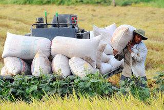 Profile change boosts rice export