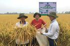 Liên kết chuỗi - 'chìa khóa' phát triển nông nghiệp bền vững