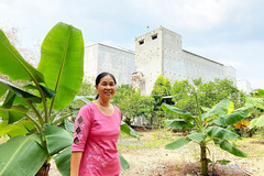 Couple earns billions of VND from salangane nest business
