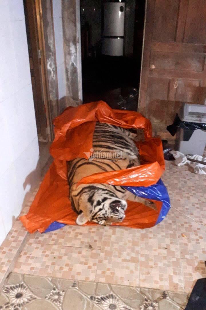 Mua cá thể hổ nặng 250kg về giật điện chết để nấu cao, người đàn ông bị khởi tố