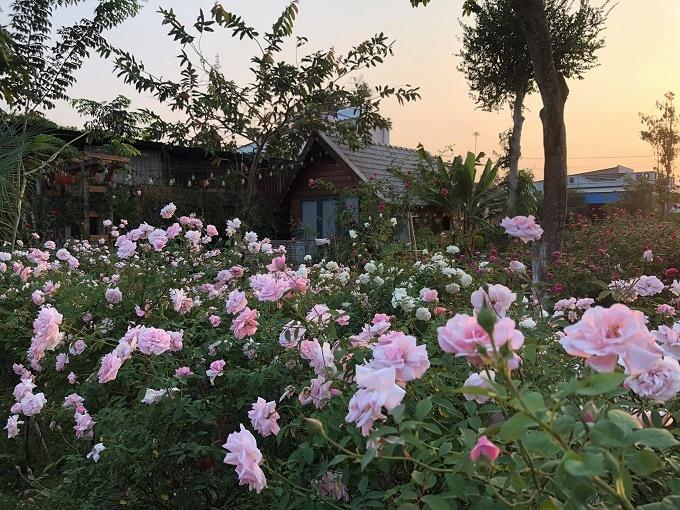 Ngôi nhà hoa hồng rộng 15m2 của vợ chồng trẻ ở Vũng Tàu