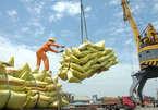 Vietnamese rice export price reaches record level