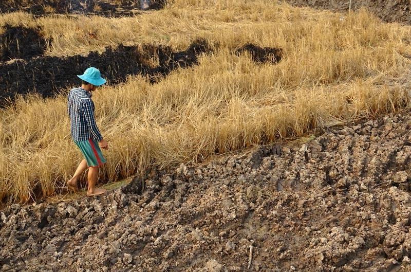 Cà Mau: Bài toán giữ đất, giữ nước, giữ người trước biến đổi khí hậu