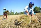 GS Võ Tòng Xuân: Nghị quyết 120 tháo 'vòng kim cô' cho người nông dân