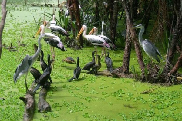 Ecotourism a means to sustain Ca Mau's bird parks