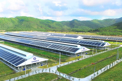 12 trang trại bò sữa của Vinamilk được triển khai dùng năng lượng mặt trời