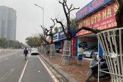 Deathof sua trees in Hanoi sparks public concern