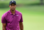 Tiger Woods xuất viện sau 3 tuần