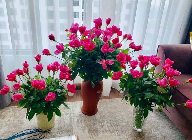 Hoa hồng lại rẻ như cho, ngồi nhà chốt bán 4 vạn bông/ngày