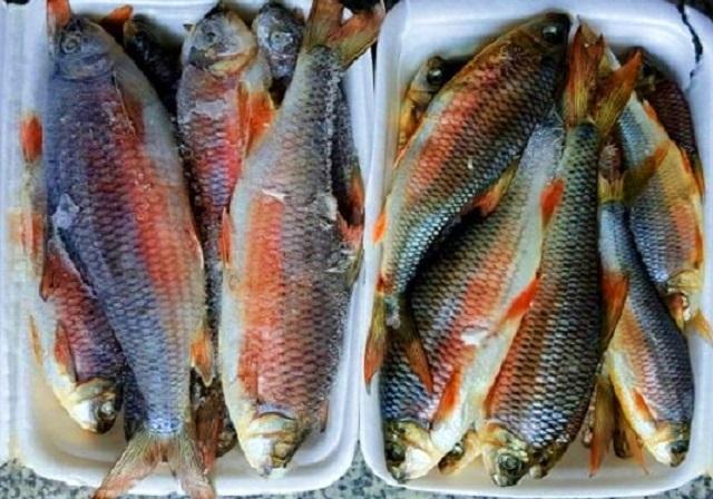 Về Bình Định thưởng thức món cá 'lạ', chỉ vượt thác để sinh sản