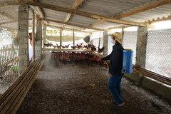 Lào Cai tăng cường các giải pháp phòng, chống dịch cúm gia cầm