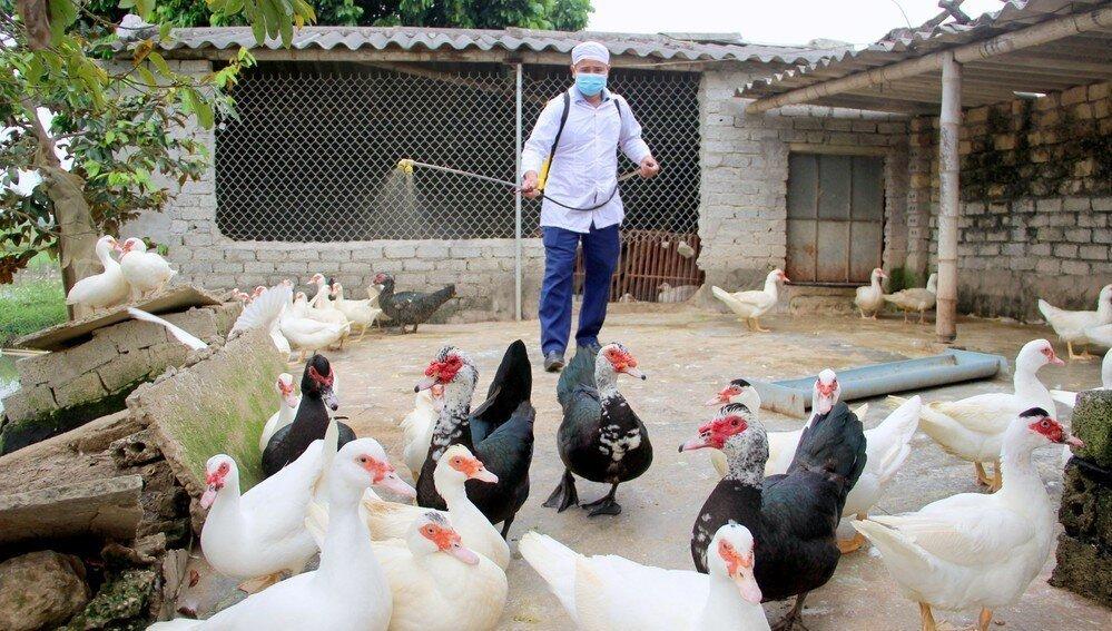 Thị xã Nghi Sơn tiêm vaccine phòng chống dịch cúm gia cầm