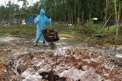 Quảng Nam tiêu hủy 6000 con gia cầm mắc bệnh