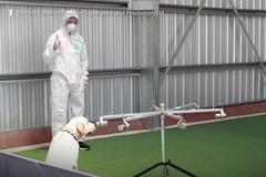 Thái Lan huấn luyện chó đánh hơi bệnh nhân mắc Covid-19
