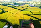 Resolution 120 changes the mindset about Mekong Delta development: expert