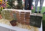 Công an vào cuộc vụ bán lan đột biến 250 tỷ đồng ở Quảng Ninh