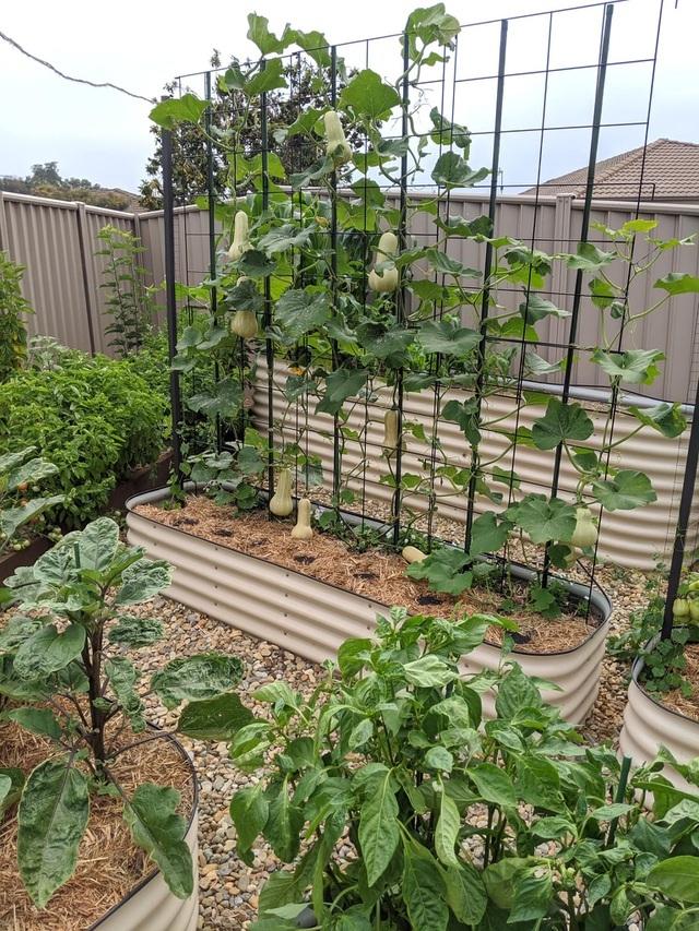 Khu vườn nhỏ đủ loại cây trái của cặp đôi yêu nhau 16 năm