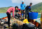Coral population remains well protected off Cham Island