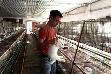 Bỏ việc nhà nước về nuôi thỏ: Bán thẳng qua Nhật, thu tiền tỷ mỗi năm