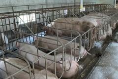 Tiền Hải tuyên truyền trên hệ thống truyền thanh cơ sở cách phòng, chống dịch bệnh gia súc