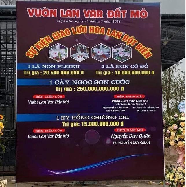 Lý do công an khó xử lý vụ bán lan đột biến 250 tỷ ở Quảng Ninh