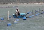 Vietnam's $8 billion seafood industry warned of risks
