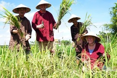 Hoi An farmers earn high income from buffalo tour
