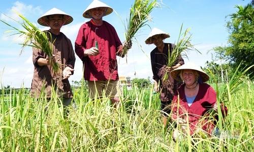 Hoi An farmers earn high income from buffalo tour