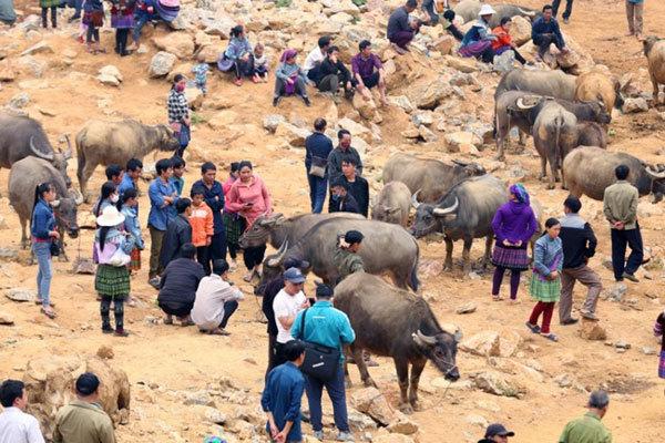 Lao Cai,Can Cau Market,buffalo market