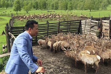 Trang trại nuôi hươu bán hoang dã của doanh nghiệp Việt ở Siberia – Liên bang Nga